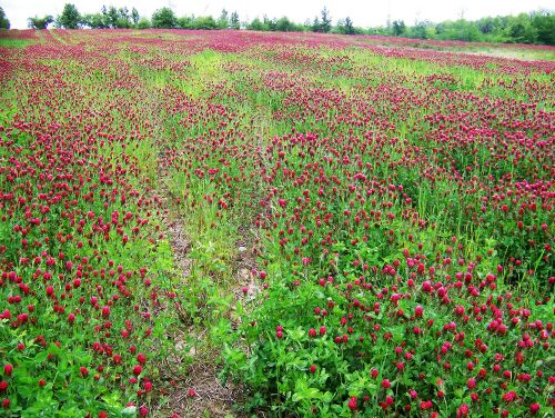 Cover crops like those shown in the photo reduce erosion, lessen impacts on water,  and protect and improve soil health.