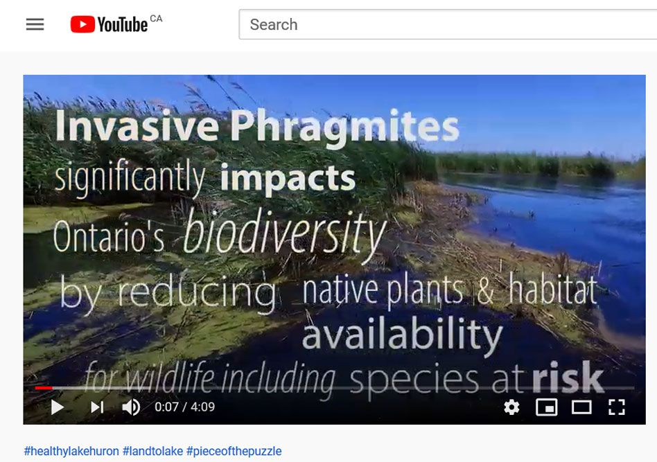 Phragmites_video_1.jpg