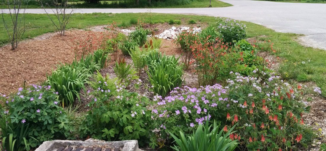 One of the rain gardens at Bayfield's Pioneer Park.